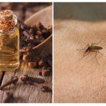 Huile de girofle contre les moustiques