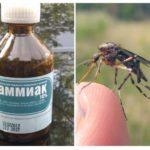Ammoniac des moustiques et des moucherons
