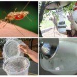 Pièges à moustiques faits maison