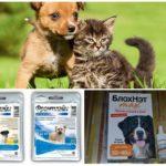 Préparations pour protéger le chien des moustiques