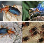 Mode de vie de scarabée