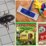 Destruction de coléoptères dans la maison