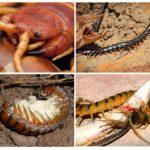 Nourriture et reproduction de l'organisme nuisible