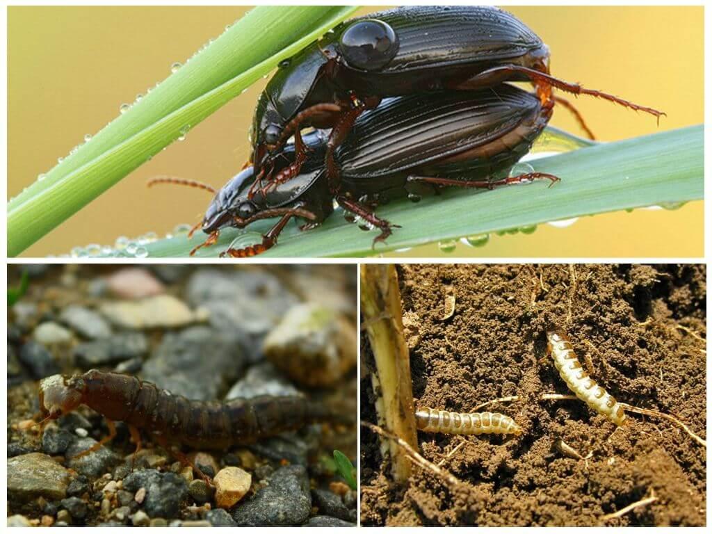 Élevage d'insectes