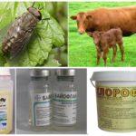 Protéger les animaux des piqûres d'insectes suceurs de sang