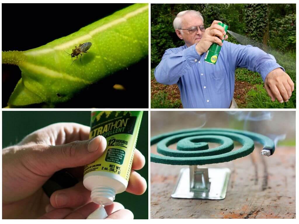 Protection contre les insectes