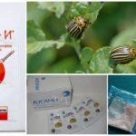 Le remède contre le doryphore de la pomme de terre Apache