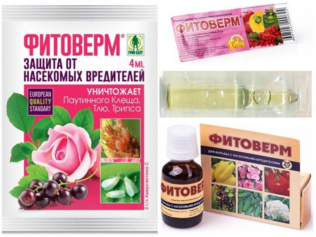 Phyto ferme du doryphore de la pomme de terre