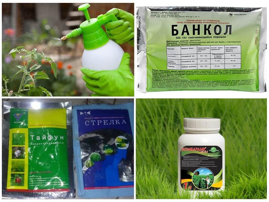 Des produits chimiques pour tuer les coléoptères
