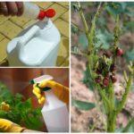 Produits chimiques contre le doryphore