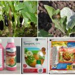 Produits chimiques du doryphore de la pomme de terre