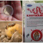 Insecticide Clotiamete du doryphore de la pomme de terre