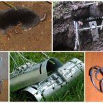 Pièges à rats et à taupes