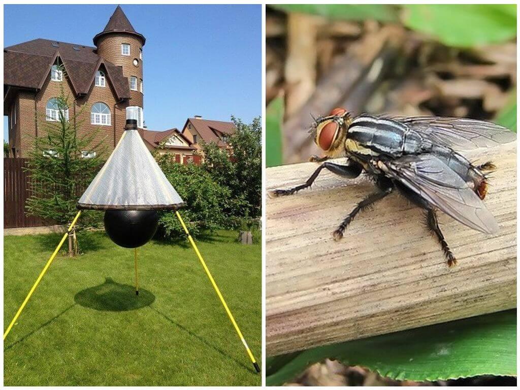 Pièges faits maison pour les mouches et les mouches