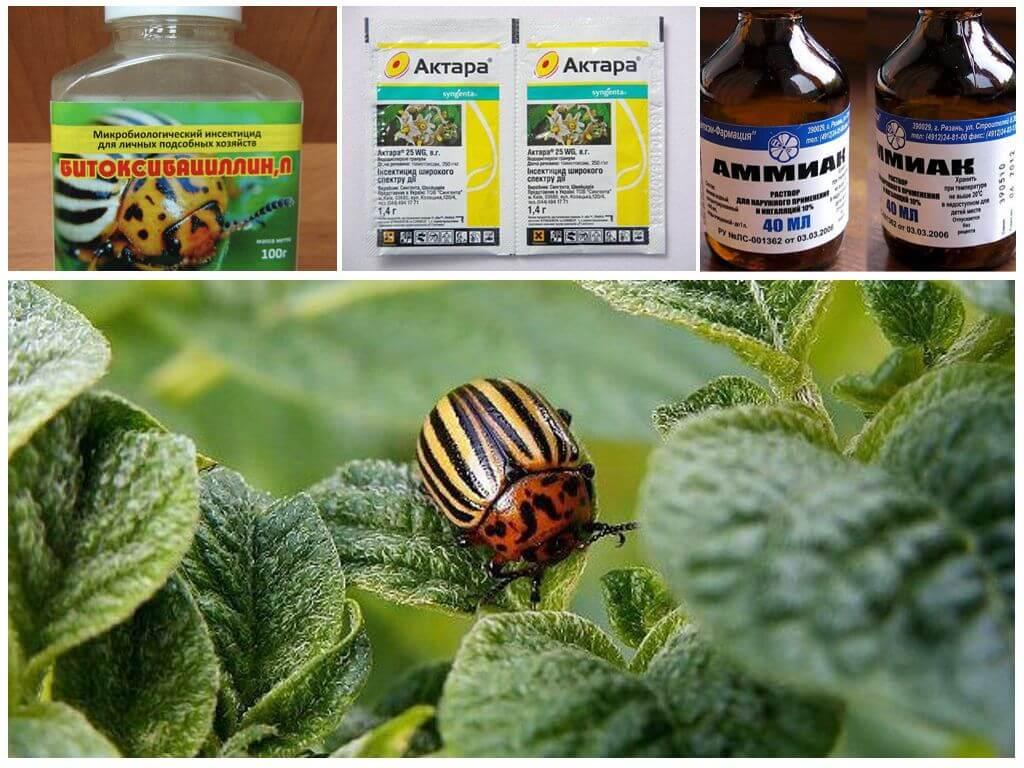 Méthodes de traitement des coléoptères