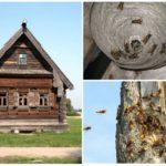 Abeilles dans une maison en bois