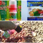 Préparations pour le traitement des graines de pomme de terre du doryphore de la pomme de terre