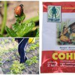 Le remède contre le doryphore de la pomme de terre Sonnet
