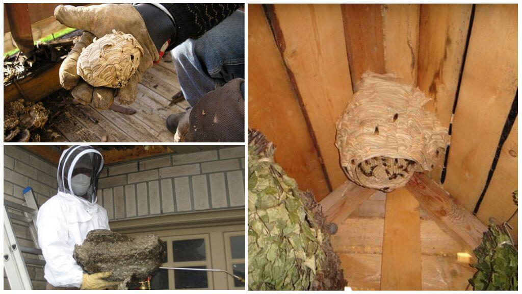 Façons de détruire les nids
