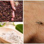 Odeur de moustique
