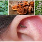 Des arômes pour combattre les moustiques