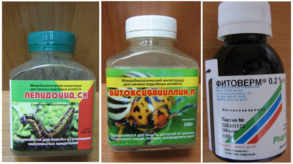 Agents biologiques contre les chenilles