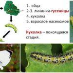 Cycle de développement du Butterfly Bowl