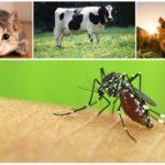 Morsure de moustiques