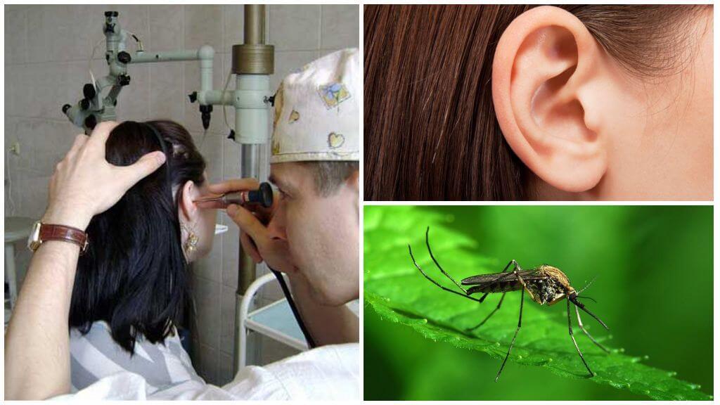 Moustique dans l'oreille