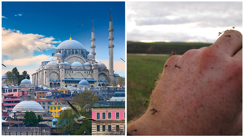 Les moustiques en Turquie