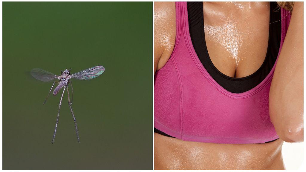 Les moustiques et l'odeur de sueur
