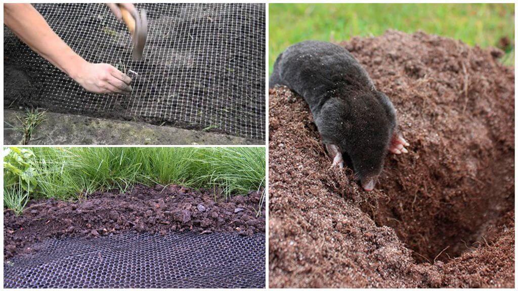 Filet de taupe dans le jardin
