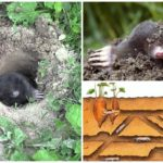 Nora mole sous terre