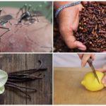 Méthodes insectifuges