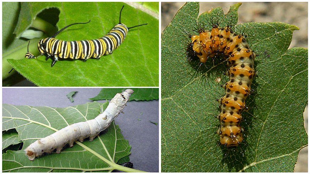 Alimentation Caterpillar