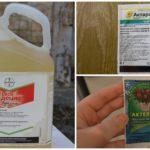 Produits chimiques de chou