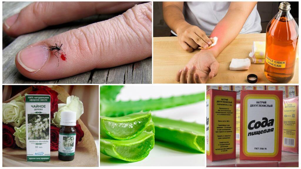 Remèdes populaires contre les piqûres de moustiques et les mouches noires