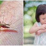 Piqûres de moustiques