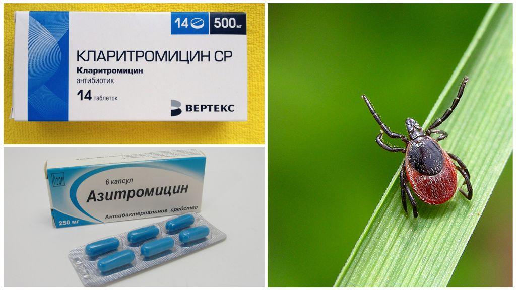 Antibiotiques après une piqûre de tique