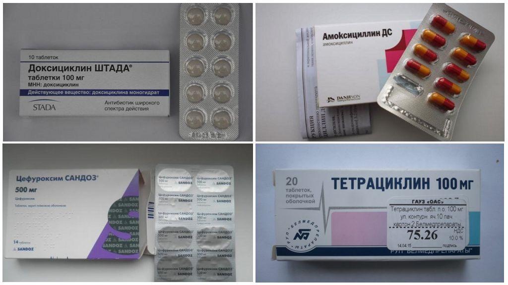 Antibiotiques pour la borréliose