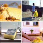 Façons de combattre les mouches dans l'appartement