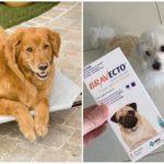 Comprimés de tiques pour chiens Bravekto