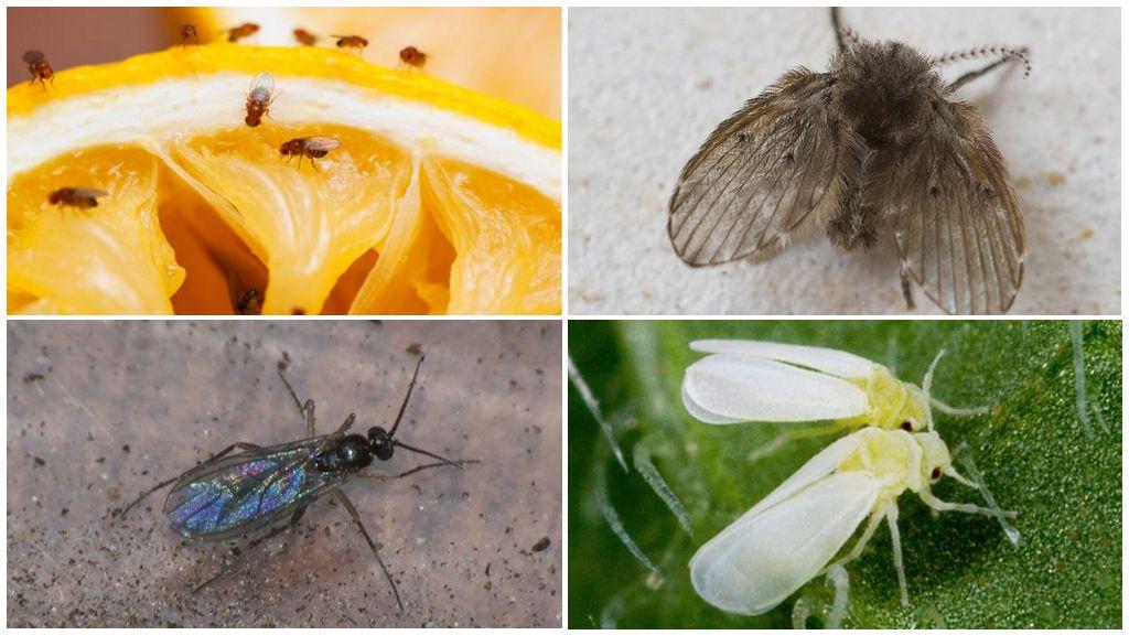 Variétés de petits insectes