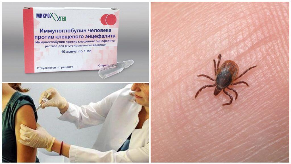 Immunoglobuline contre l'encéphalite à tiques