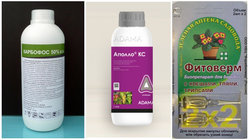 Insecticides pour lutter contre les acariens