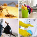 Moyens de lutter contre les mouches Drosophila