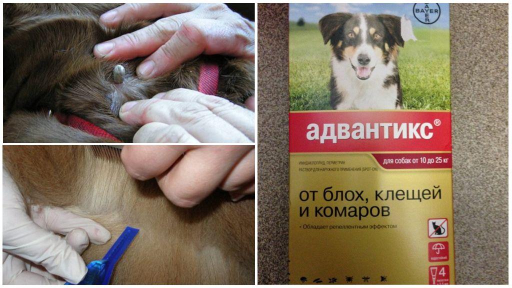 Gouttes pour chiens de tiques