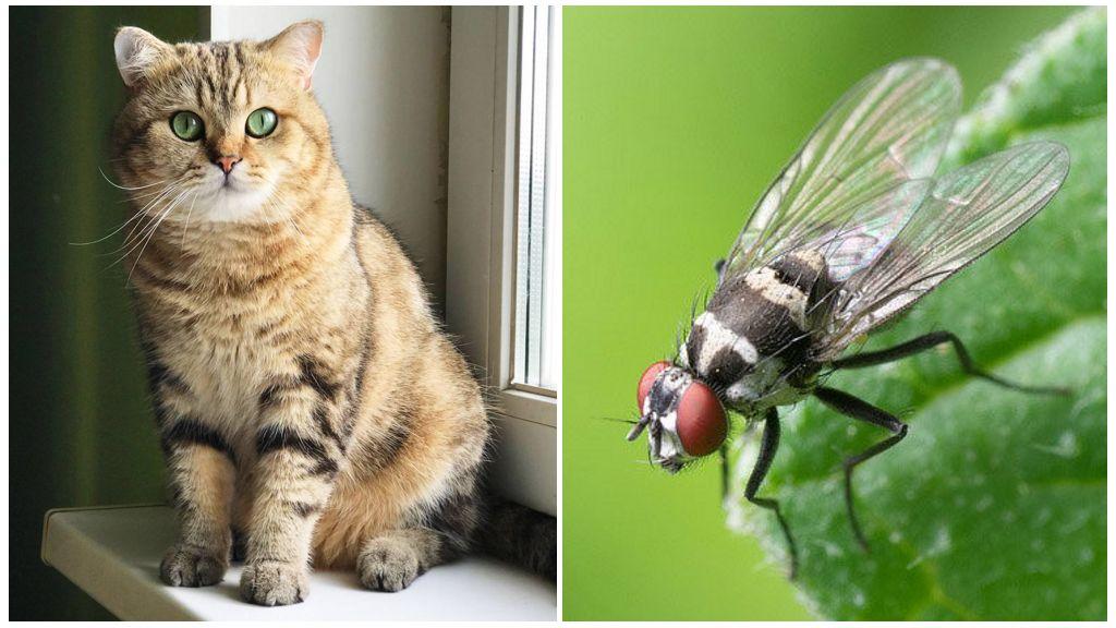 Chat et mouche