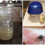 Pièges faits maison pour les mouches