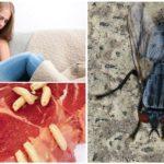 Intoxication intestinale due aux asticots